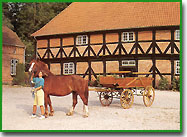 Enjoy life in a family farm in the country with horses and other animals!
